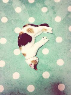 cat-pic:  大の字ならぬFの字で寝てました(笑) http://nekopple.com
