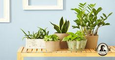 5 Houseplants That Will Improve The Air Quality In Your Home Best Indoor Hanging Plants, Indoor Flowers, Propagate Succulents From Leaves, Succulents Garden, Hydroponic Gardening, Container Gardening, Large Flower Pots, Decoration Plante, House Plant Care