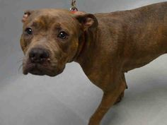 SUPER URGENT - KYLEE - A1096638 - - Brooklyn Please Share:TO BE DESTROYED 11/20/16 **ON PUBLIC LIST – AVERAGE RATED!!** - Click for info & Current Status: http://nycdogs.urgentpodr.org/kylee-a1096638/