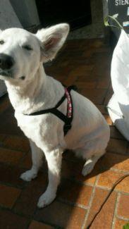 Hundegeschirr, Hund, Halsband, Leine, KlimperHerzen, neu in Niedersachsen - Nordhorn | Hundezubehör gebraucht kaufen | eBay Kleinanzeigen