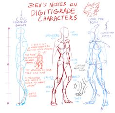 Notes on Digitigrade Characters by Zyraxus.deviantart.com on @deviantART