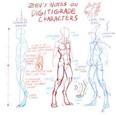 Notes on Digitigrade Characters by Zyraxus.deviantart.com on @deviantART