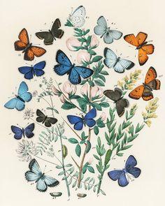 Butterfly garden - print