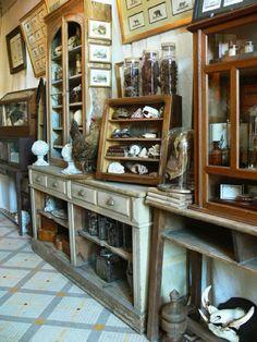 Naturalis: The taste of Petrol and Porcelain | Interior design, Vintage Sets and Unique Pieces www.petrolandporcelain.com cabinet of curiosities ª