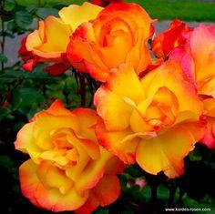 Rose Bonanza  ®