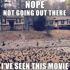 I think of that movie every time I see a flock of birds.