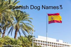 An extensive list of great Spanish dog names for your breeds from Spanish speaking nations. Puppy Names, Dog Names, Spanish Food Names, Spanish Dog Breeds, Dora The Explorer, Havana Cuba, Names With Meaning, How To Speak Spanish, New Puppy