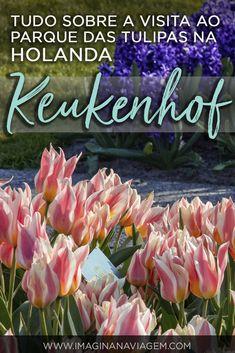 Um guia completíssimo para quem deseja visitar o maior jardim de tulipas do mundo: Keukenhof - na Holanda! Tá de viagem marcada para Amsterdam? Não perca a chance!  #keukenhof #flores #tulipas #holanda #amsterdam #turismo #viagem #parque