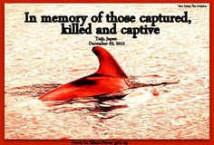 SeaWorld gets their dolphins from Taiji, Japan...