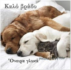 Hate Cats, Cute Cats And Dogs, I Love Dogs, Adorable Dogs, Cute Puppies, Dogs And Puppies, Poodle Puppies, Baby Animals, Cute Animals