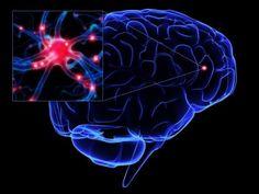 Identifican un nuevo tipo de neurona relacionada con la orientación espacial