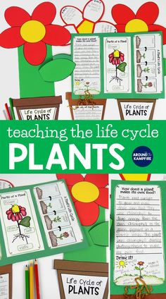 Plant life cycle activities-This complete science unit is ideal for first, second, and third grade teachers and homeschool parents with hands-on activities, lesson plans, teaching Power Point, science experiments, and plant anchor charts. Students learn about photosynthesis, parts of a plant, how seeds are dispersed, and pollination. 1st, 2nd, and 3rd graders write about science in a culminating foldable flower lapbook to define, label, and explain about the life cycle of plants. The flower…