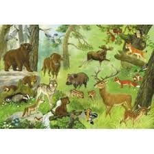 Znalezione obrazy dla zapytania gdzie spędzają zimę zwierzęta leśne zdjęcia chomikuj