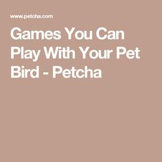Games You Can Play With Your Pet Bird - Petcha