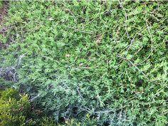 Tüm yeşil yapraklı bitkilerin ömrünü uzatıyor ve parlatıyoruz - Bahçe Malzemeleri sahibinden.com'da