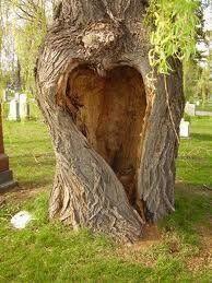hart in boom