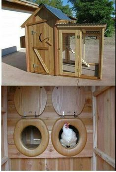 Out house chicken coup~  THIS is so cute!  Love the toilet seat nest box doors!  Great idea for when you need to block them off while they are too young to use the nests or to discourage nest box sleepers.:)