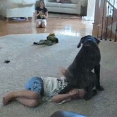 17 GIFs of Animals Being Big Mean Jerks