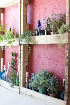 Herb garden on kitchen wall.