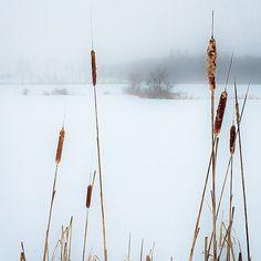 Winter Delicate