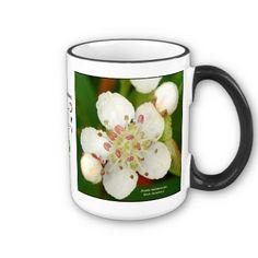 Aronia melanocarpa, black chokeberry mugs by New England   Wildflower Society