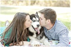 A sweet, snuggly engagement session - with a gorgeous Husky dog - by Just a Dream Photography   http://www.justadreamllc.com
