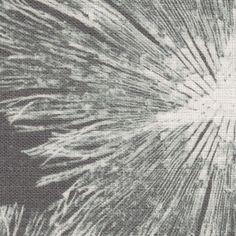 rhipidosiphon