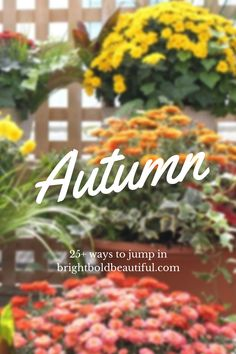 25+ ways to jump into Fall from centerpiece DIY's and Autumn vignettes, to comfort food recipes and table setting ideas.