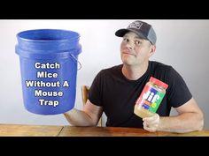 Rat Trap Diy, Mouse Trap Diy, Mouse Traps That Work, Catch A Mouse, Rat Traps, It Works, Mice, Simple, Youtube