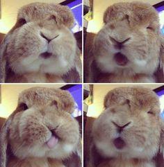 Lol bunny rambo