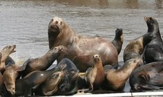See sea lions on Elkhorn Slough Safari