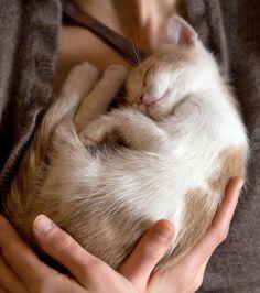 the best attitude 83054 8460d awww! Perro Gato, Animales Pequeños, Gatos, Mascotas, Perros, Gato  Soñoliento