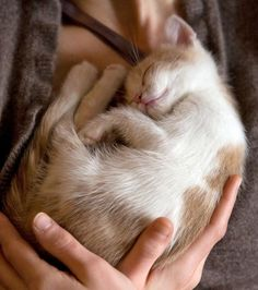 And a cat to hug, of course!!.