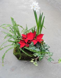 Dish Garden, Landscape Services, Christmas Dishes, Christmas Flowers, Garden Images, Lawn Care, Holiday Decorations, Poinsettia, Unique Gifts