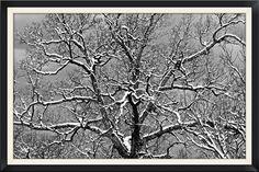 https://flic.kr/p/q3jGWx | Snow Covered Tree in Relief | Snow Covered Tree in Relief