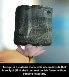 Post with 3053 votes and 5319 views. Aerogel is a material made with silicon dioxide that is so light air) it can rest on this flower without bending its petals. Hangzhou, Weird Facts, Fun Facts, Random Facts, Crazy Facts, Pointless Facts, Strange Facts, Bizarre Facts, Weekender
