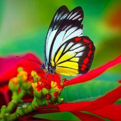 Beautiful bright colors!!