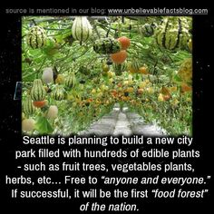 "unbelievable-facts: "" "" Seattle is planning to build a new city park filled with hundreds of edible plants - such as fruit trees, vegetables plants, herbs, etc… Free to ""anyone and everyone."" If successful, it will be the first ""food forest"" of the..."