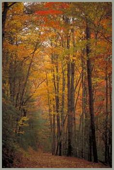 http://blueridgemountains.com/chattahoochee_national_forest.html      I can not wait to take my camera and experiance all this beauty in the forrest!! I may have a very hard time coming home.