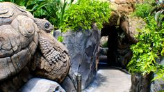 Discovery Island Trails -- Stroll along tranquil pathways around the Tree of Life and discover a lush landscape brimming with wildlife.
