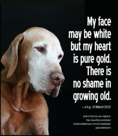 Top 10 reasons to Adopt a senior dog.  http://www.aspca.org/adoption/adoption-tips/reasons-to-adopt-an-older-dog.aspx #pets #adopt #seniors