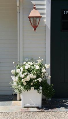 This classic box planter is the perfect balance to the flowing look of this rose. Designed by Donna Lynn Landscape Design in Santa Barbara, CA.