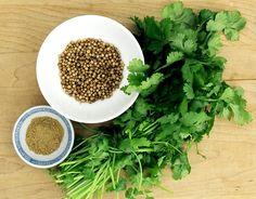 Применение в кулинарии зелени и семян кориандра. Зелень растения кориандр, более известного на Кавказе, как кинза, характеризуется мощным сильным специфическим ароматом и довольно острым вкусом. Ее добавляют к супам, сыру, она очень сочетается с жирными блюдами. Создавая свои кулинарные творения следует поэкспериментировать с...http://vk.com/dinnerday; http://instagram.com/dinnerday #кориандр #кулинария #кинза #пряность #dinnerday #food #cook #spice #coriander