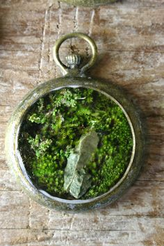 The slug and the squirrel - a voice from the past, hovering like a ghost. Nature Plants, Green Nature, The Slug, Sacred Groves, Old Pocket Watches, Magic Crafts, Mini Terrarium, Glass Vessel, Apothecary Jars