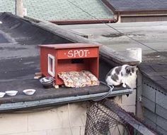 feral cat house on garage