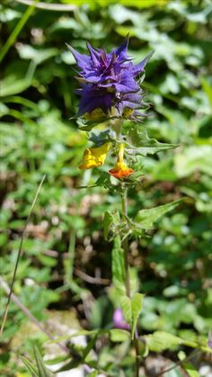 Plants, Flowers, Hiking, Plant, Planets