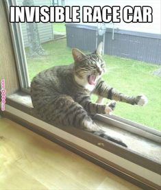 Funny Animal Quotes 212091463677982790 - Funny Cats : 16 Funny Cat Photos with Caption Like this. Source by lpfilipine Funny Animal Jokes, Funny Cat Memes, Cute Funny Animals, Cute Baby Animals, Funny Dogs, Funny Humor, Hilarious Quotes, Funny Stuff, Cat Stuff