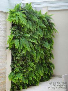 A vertical garden. Love this wall of ferns!