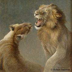 Robert Bateman - Mating Lions 20 x 20 Oil on board Wildlife Paintings, Nature Paintings, Wildlife Art, Animal Paintings, Big Cats Art, Cat Art, Lynx, Amazing Animal Pictures, Nature Artists