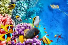 Colorful fish and corals (photo: Brian Kinney/Shutterstock)